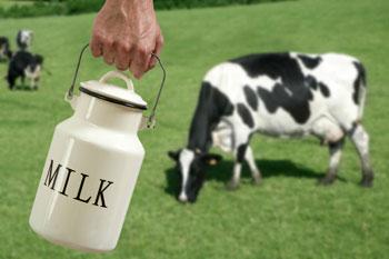 Коровье молоко при грудном вскармливании