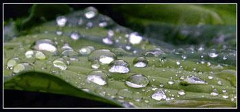 Капельки дождя