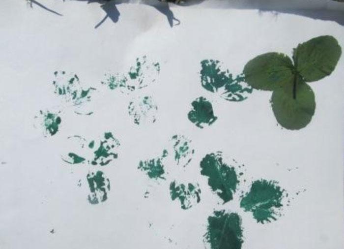 Отпечатки трав