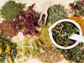 Травы для здоровья всей семьи