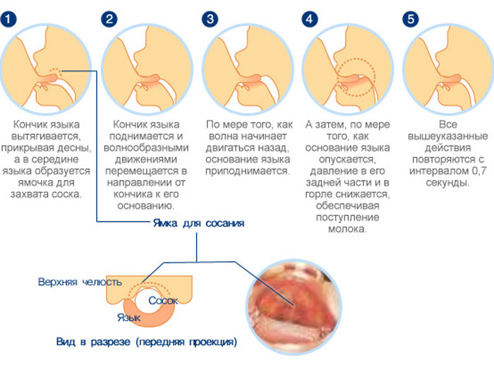 Техника захвата соска при грудном вскармливании
