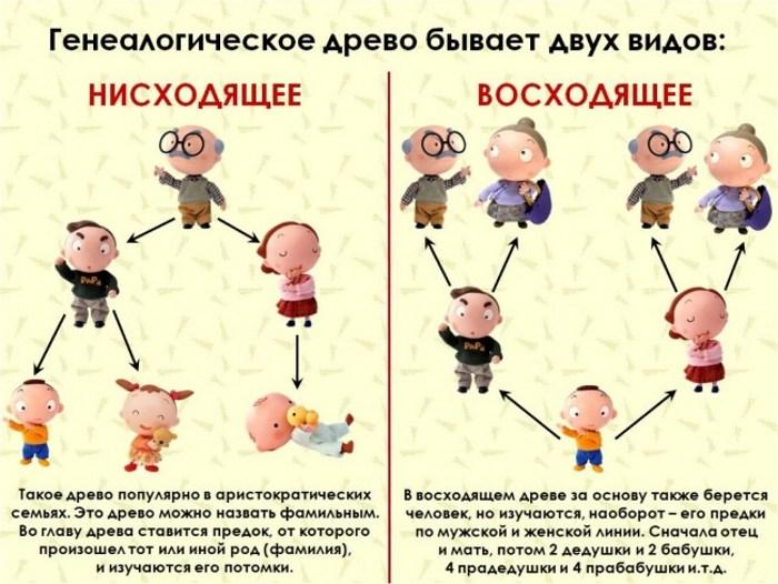 Составление родословной