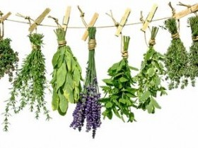 Травы во время кормления грудью