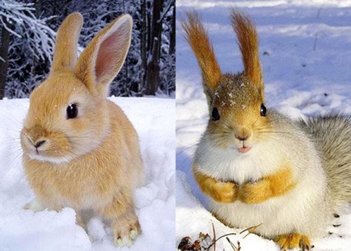 Зайчик и белочка