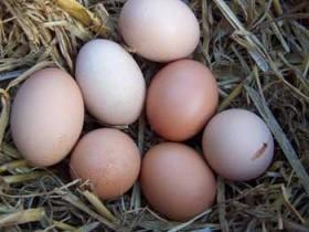 Яйца и яичница
