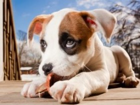 Ребенок и собака: идеальная пара?