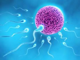 Мужская сила: путь сперматозоида