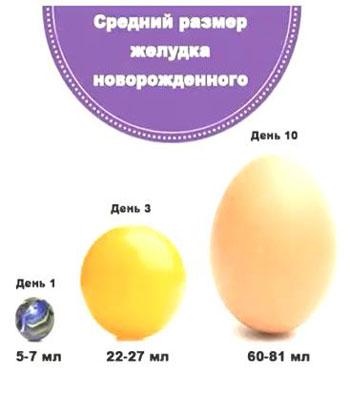 Размер желудка новорожденного